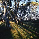 Snowgums at Ropers Hut by ShaneBooth