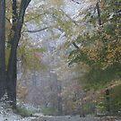 Ringwood Fall  by mikepaulhamus