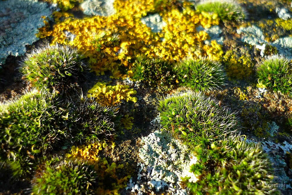 Moss and lichen by Yonmei