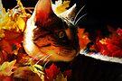 Amongst The Leaves by jodi payne