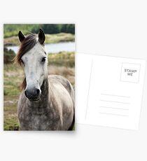 Connemara Pony  Postcards