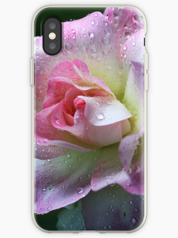 Pink Rose iPhone by Evita