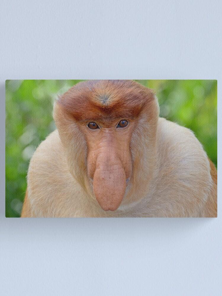 Alternate view of Proboscis Monkey - Nasalis larvatus Canvas Print