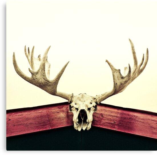 moose trophy by Priska Wettstein