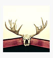 moose trophy Photographic Print