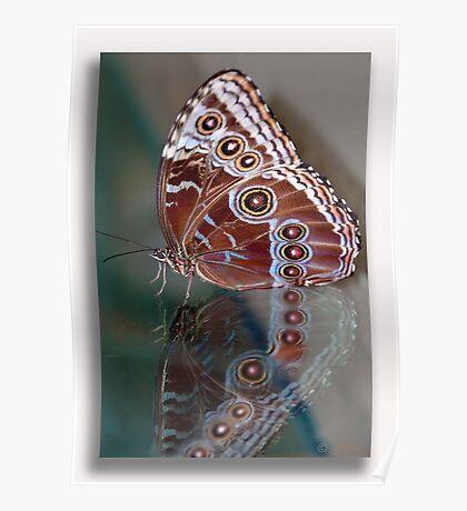 Le Papillon et Narcisme  Poster