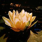 Glowing Lotus by Richard Bradish Jr