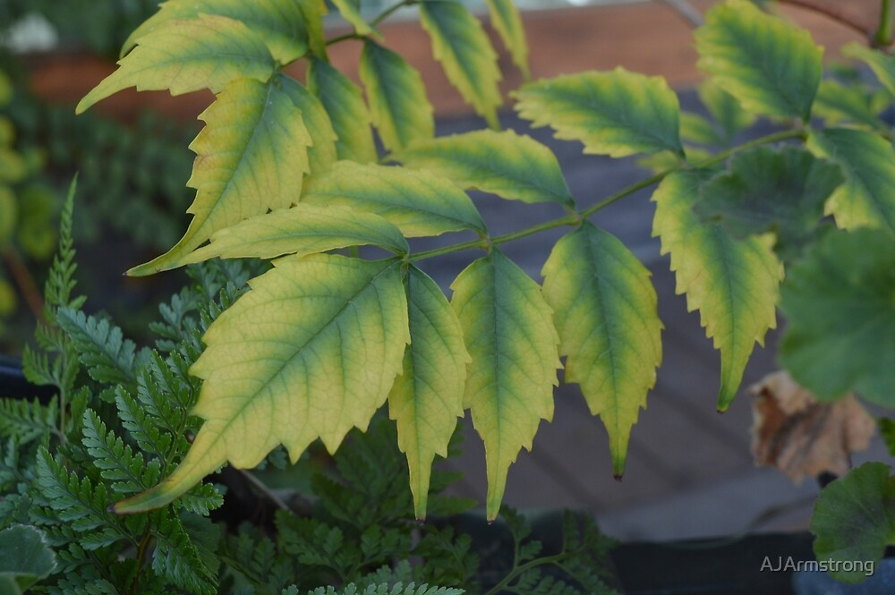 Summer Garden Leaves by AJArmstrong