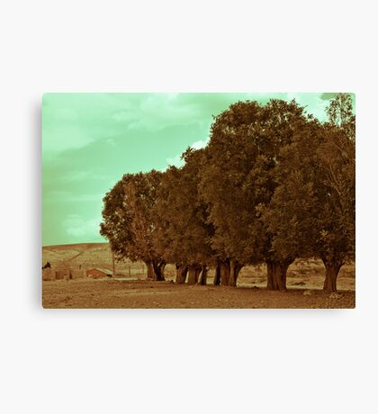 The Tree Line Barrier Canvas Print