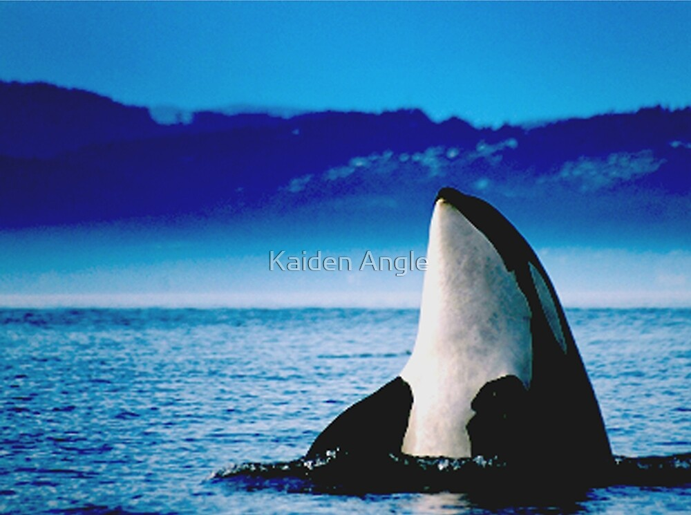 Killer Whale by Kaiden Angle