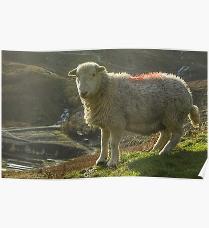 Another Walk, Another Herdwick Poster