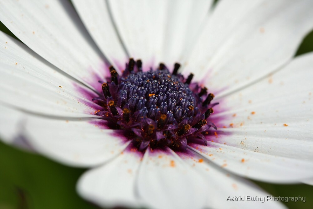 Pollen Explosion by Astrid Ewing Photography