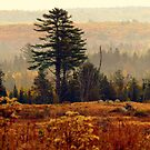 Blueberry Field in Autumn by Patty Gross