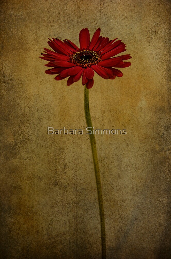 Daddy's Flower by Barbara Simmons