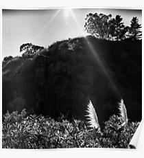 Pampas Grass, Glen Canyon Park, San Francisco Poster