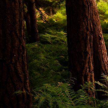 Tree Trunks by Wealie