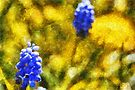 Grape Hyacinth amid Dandelions by David Carton