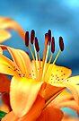 Tiger Lily Stamens by Debbie Pinard