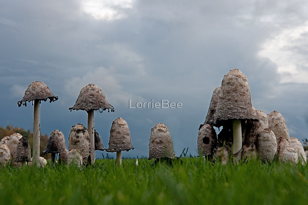Ink cap mushrooms by LorrieBee