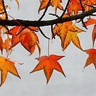 the season by wistine