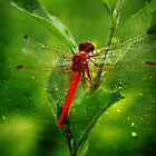 The Red Baron by reflector