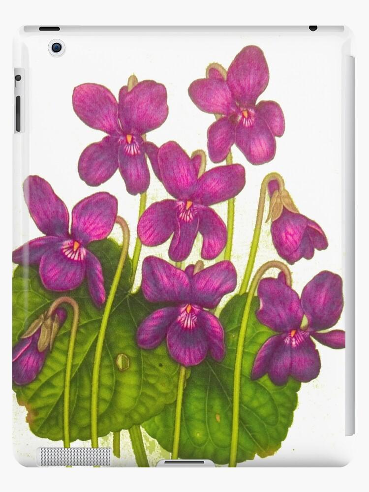 violets by MaviSchirripa