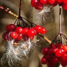 Berries & More by jules572
