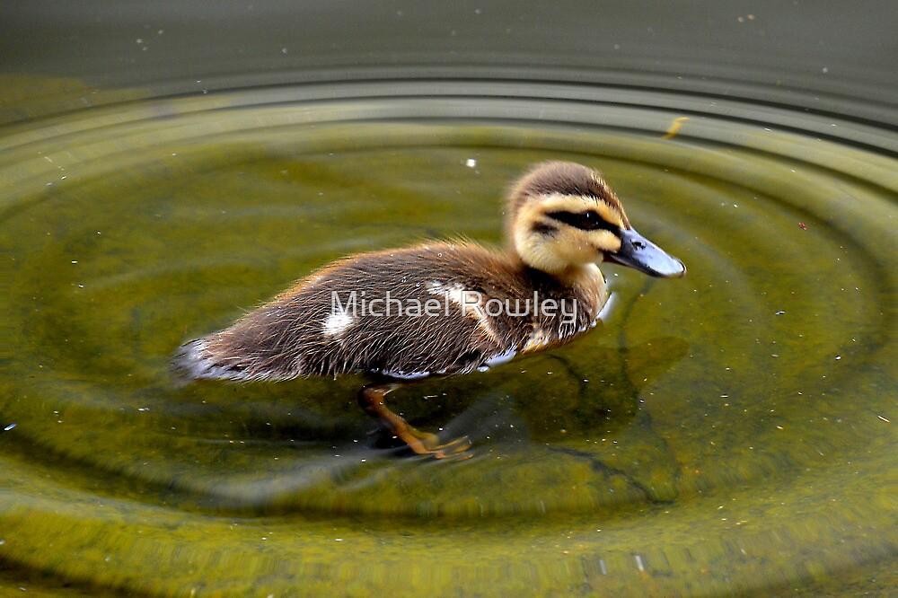 Duckling  by Michael Rowley