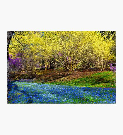 Spring Layers Photographic Print