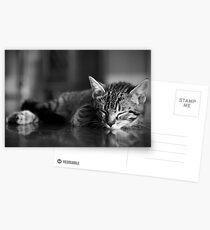 Kitten dreaming Postcards