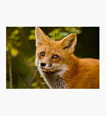 Fox Images Photographic Print