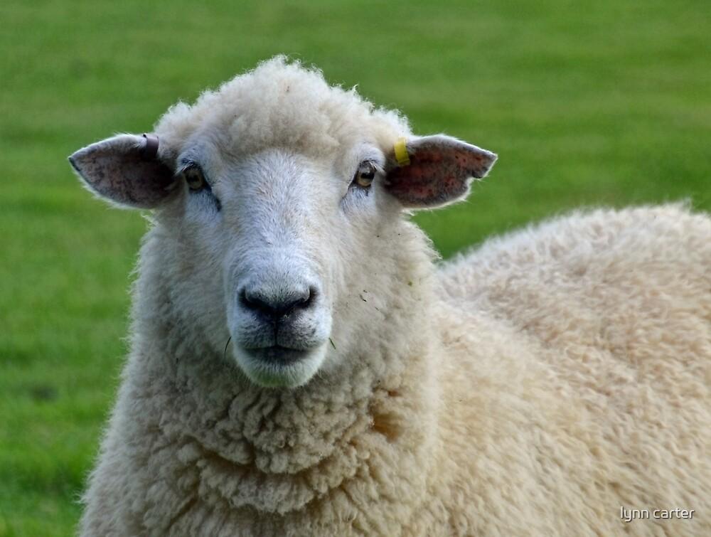Hello Ewe..........Dorset UK by lynn carter