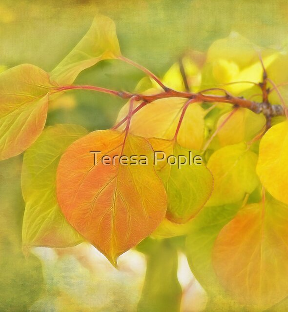 changing by Teresa Pople