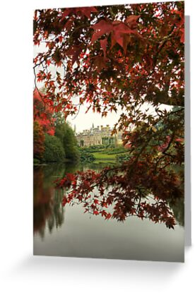 Through the Trees by Bob Culshaw