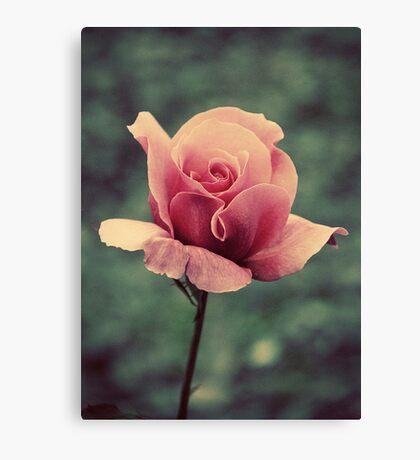 Simply A Rose.... Canvas Print