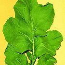 Green Leaf by Bindu-Juneja