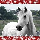 Connemara Pony Christmas Card - Type 1 by ConnemaraPony
