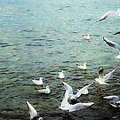 Seagulls Swooping by rhiannon85