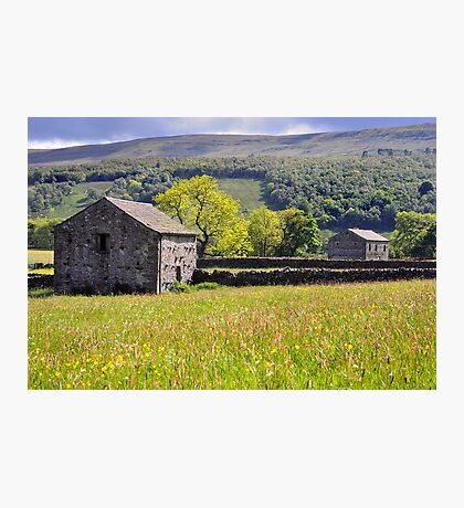 Summer Meadow, Wharfedale - The Yorkshire Dales Photographic Print