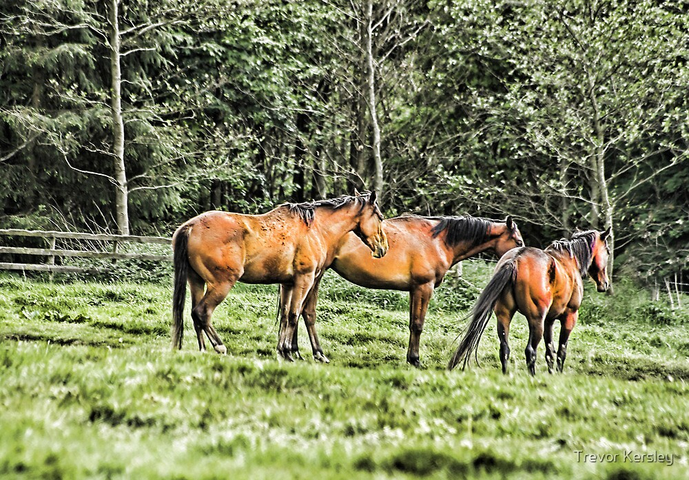 Horses by Trevor Kersley