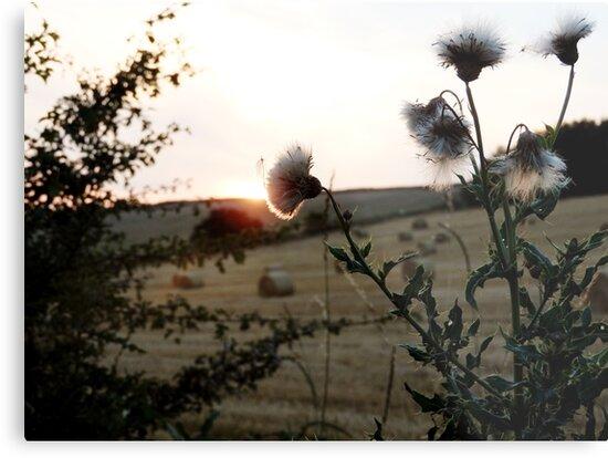 Sunset Flowers by upsidedownRETRO