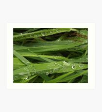 Rain drops on grass Art Print