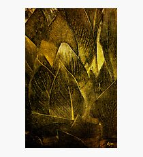 Canna In Gold Photographic Print