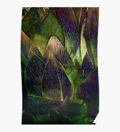 Canna In Purple Poster