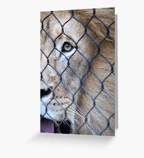 I Spy a Lion Greeting Card