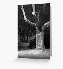 City Tree Greeting Card