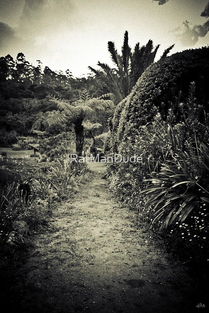 Garden Path - Vumba Botanical Gardens by RatManDude