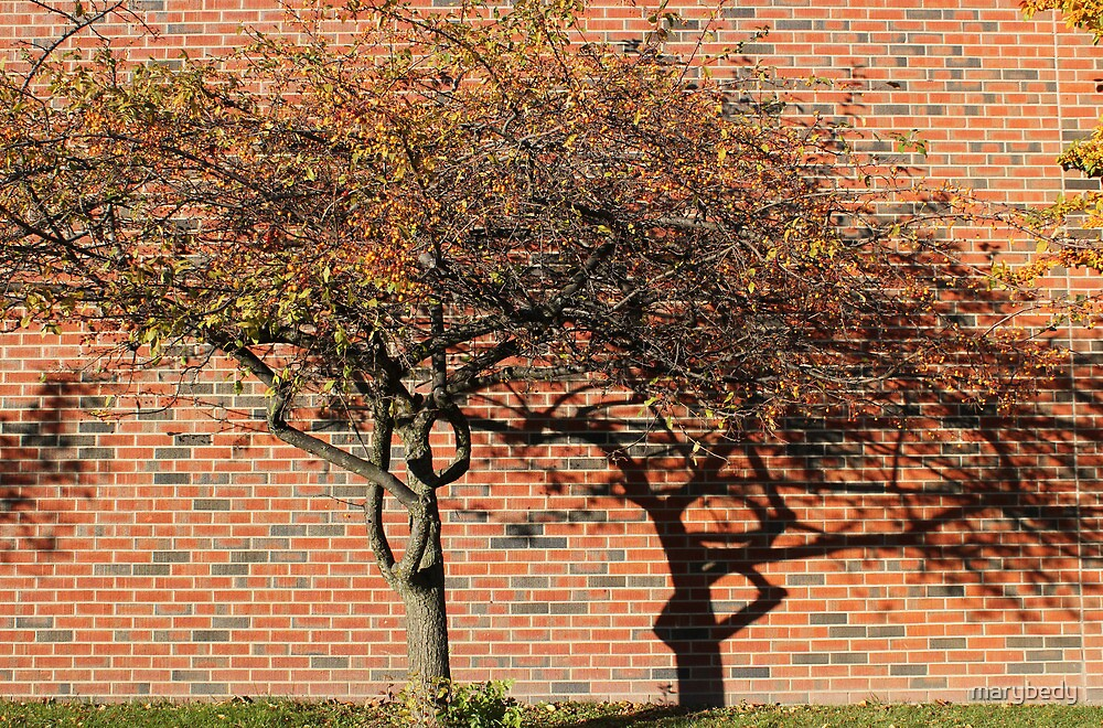 Tree and Shadow by marybedy