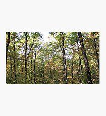 Kaona Wood - Six days later - 7 Photographic Print