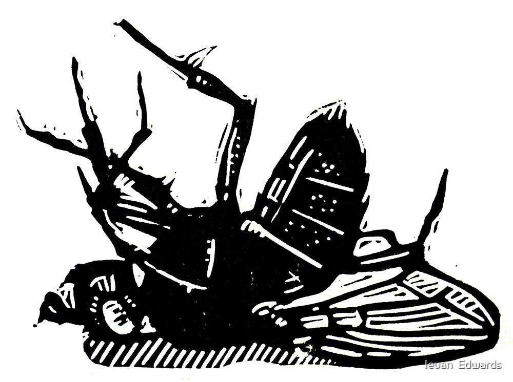 Dead Fly linocut by Ieuan  Edwards